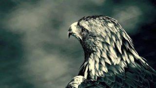 Sin una conciencia elevada nuestras mentes son el reflejo de nuestros miedos🙏🏻💙🦅