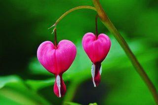 No se puede dar nombre a lo que no tiene forma…hay cosas que solo pueden ser sentidas, vividas, experimentadas desde el corazón…con el Alma 🙏🏻🤍🌱